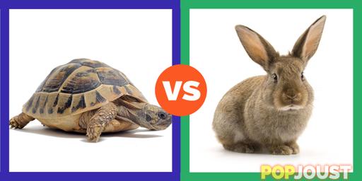 Hare Vs Tortoise Hare Vs Tortoise