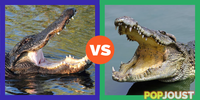 Which is the better reptile