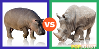 Which is the better massive mammal