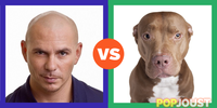 Which is the better pitbull
