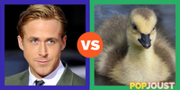 Who is the better gosling
