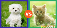 Which is more sickeningly popular on the internet